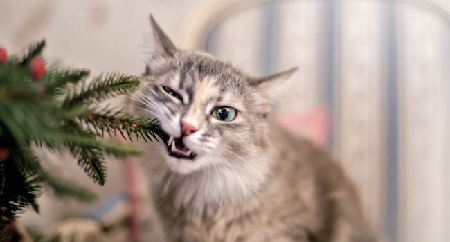 Adult Cat Chewing on Tree