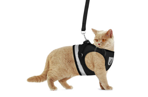 Gauterf Cat Harness with Leash
