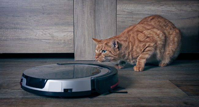 Curious cat checking out robot vacuum cleaner