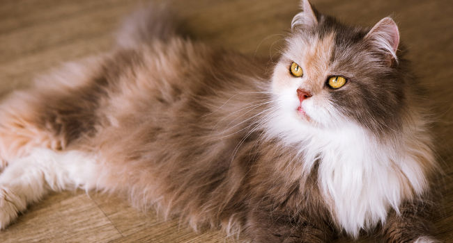 Best Cat Food For Shedding Reduce Shedding Amp Hair Loss
