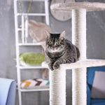 Cat relaxing on cat tree