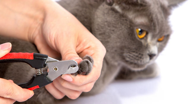 cat owner trimming their cat's nails with clippers