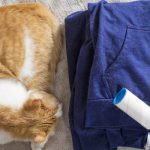 Best Ways to Reduce Cat Shedding