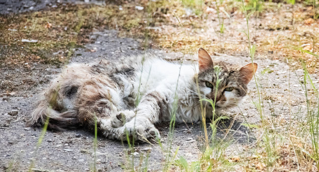 cat rolling in the dirt