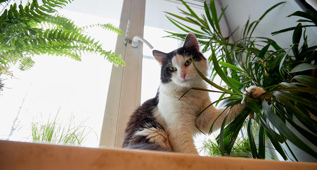 Cat eating houseplant